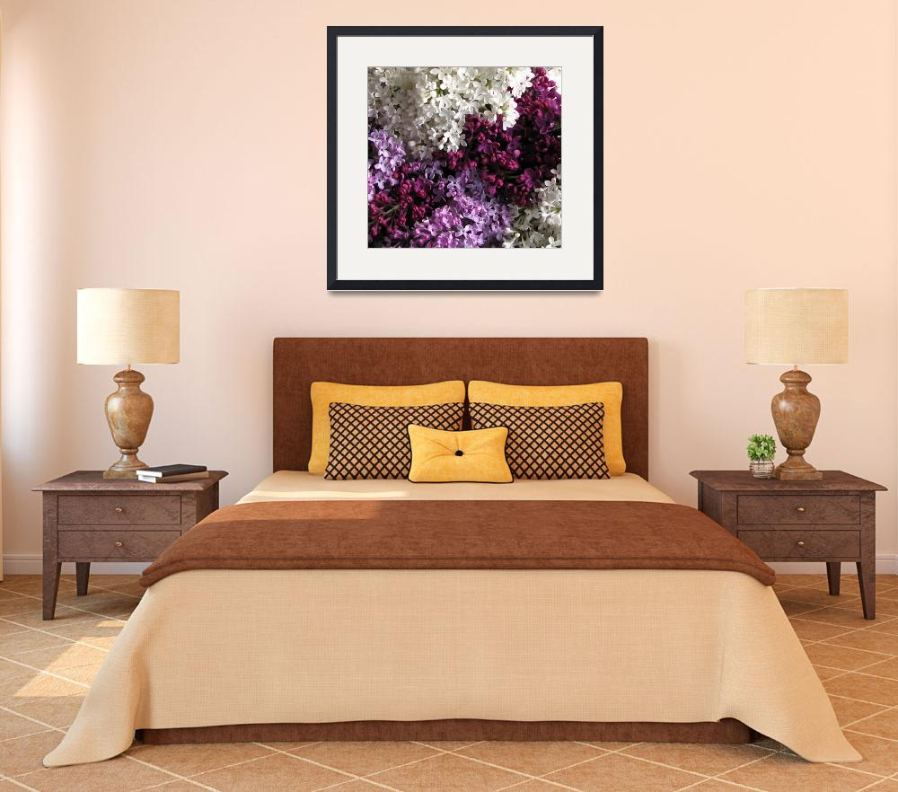 """""""Lilacs&quot  (2008) by NorthernLala"""