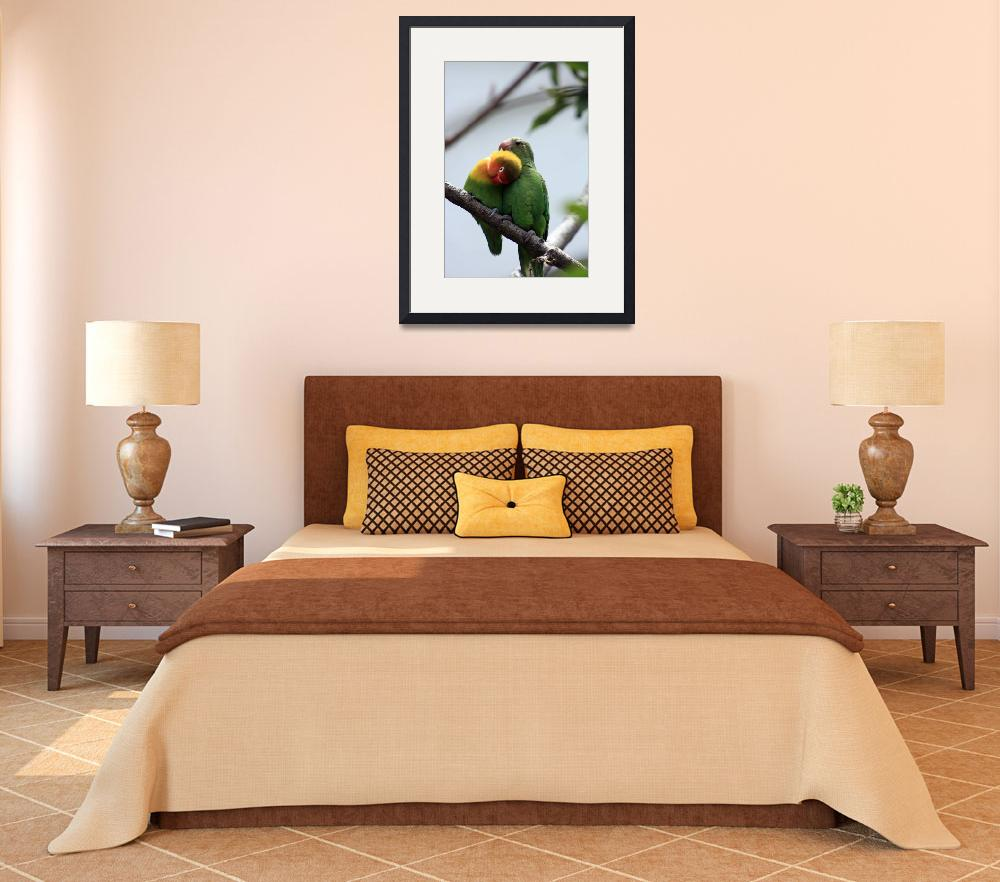 """""""Parrots Being Affectionate&quot  (2013) by rhamm"""