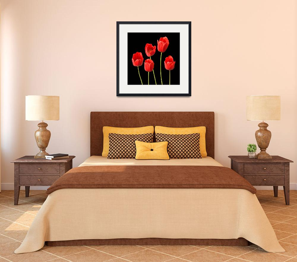 """""""Red Tulips Black Background Square Wall Art&quot  (2012) by NatalieKinnear"""