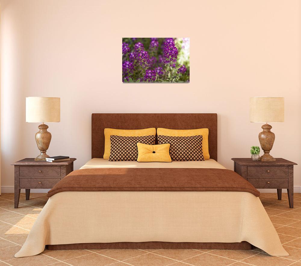 """""""Mini Purple Flowers""""  (2008) by MNTPhoto"""