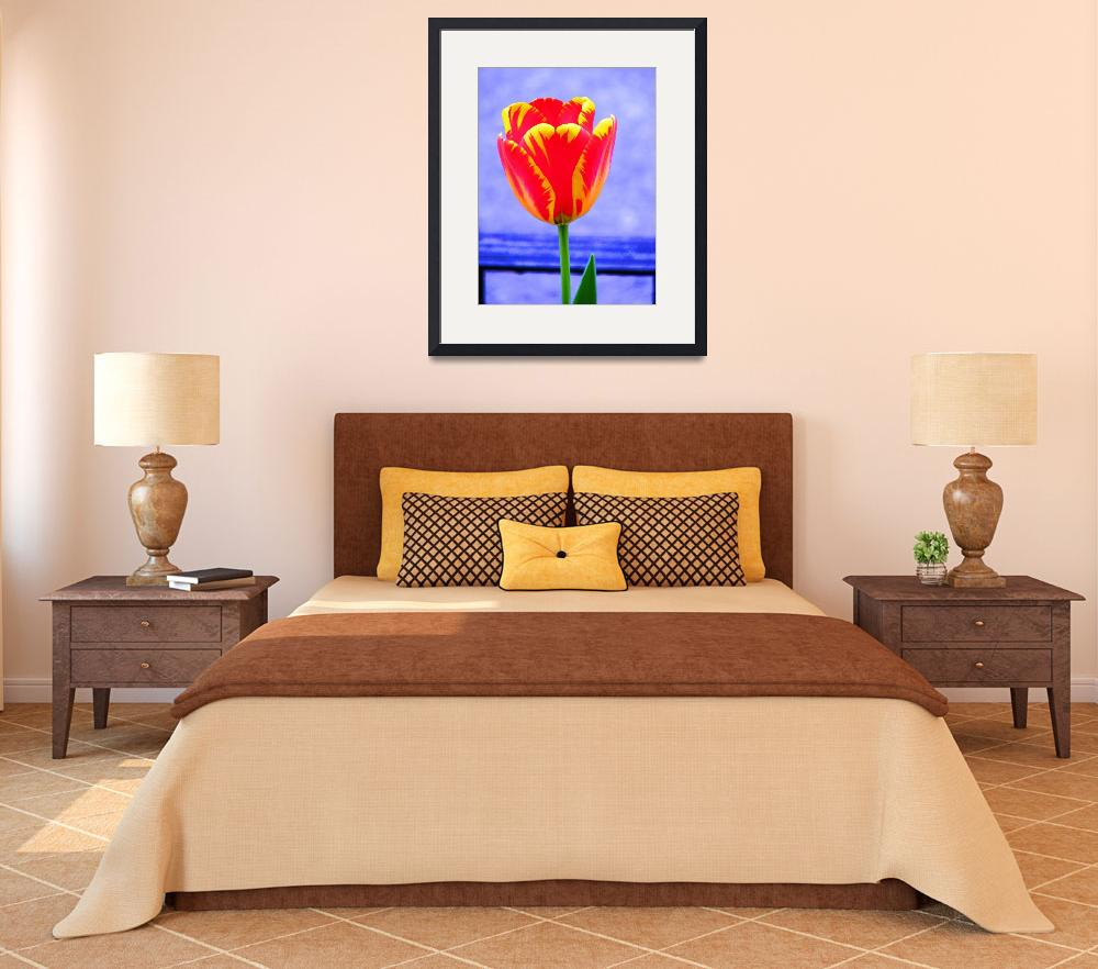 """""""Tulip on Blue&quot  (2008) by mmcclain"""