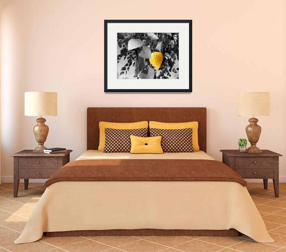 """""""Photography For Sale - Golden Birch Leaf Still Lif&quot  (2005) by word1001"""