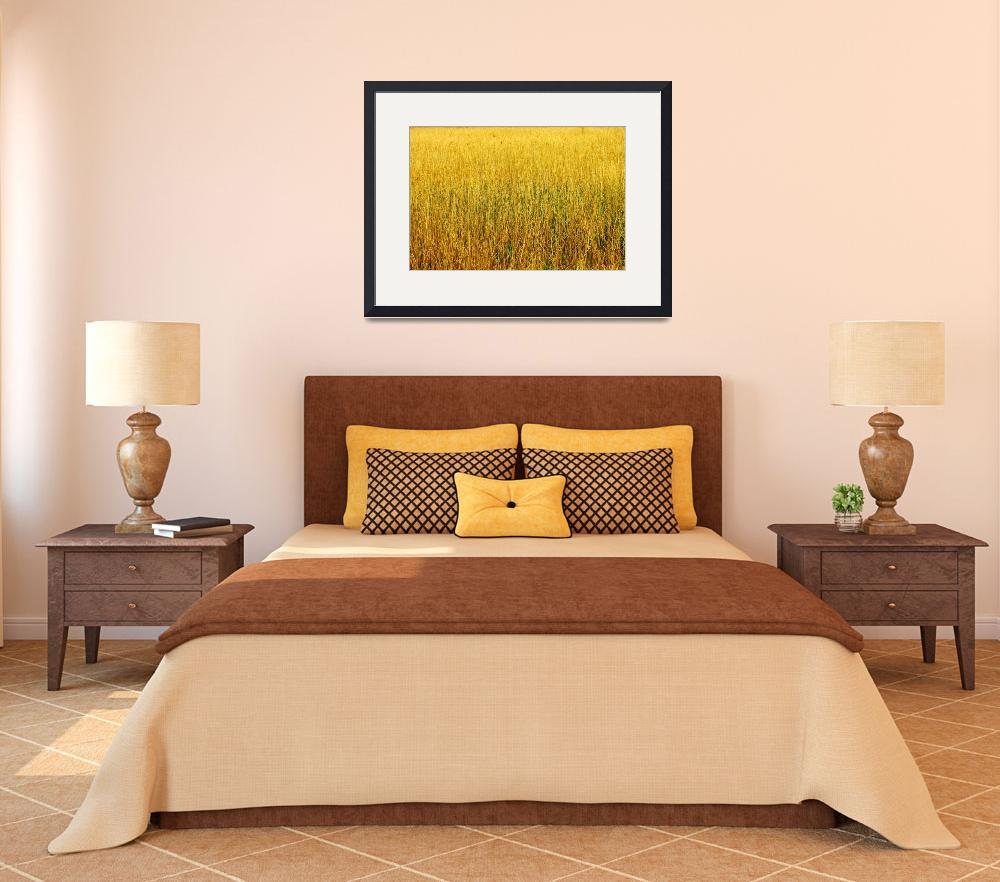 """""""Yellow Gold Grass&quot  (2011) by Artscena"""