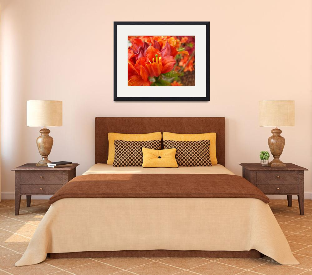 """RHODIES Red Rhododendrums Flowers Art Print Orange&quot  (2009) by BasleeTroutman"