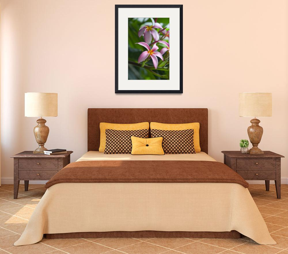 """""""Pink Plumeria Flowers&quot  (2008) by blisspixel"""