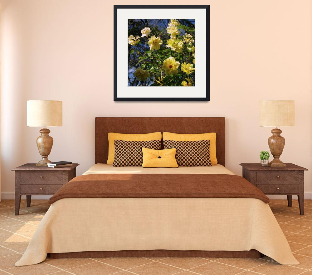 """""""My Yellow Roses Are Putting on a Show&quot  (2011) by GinetteCallaway"""