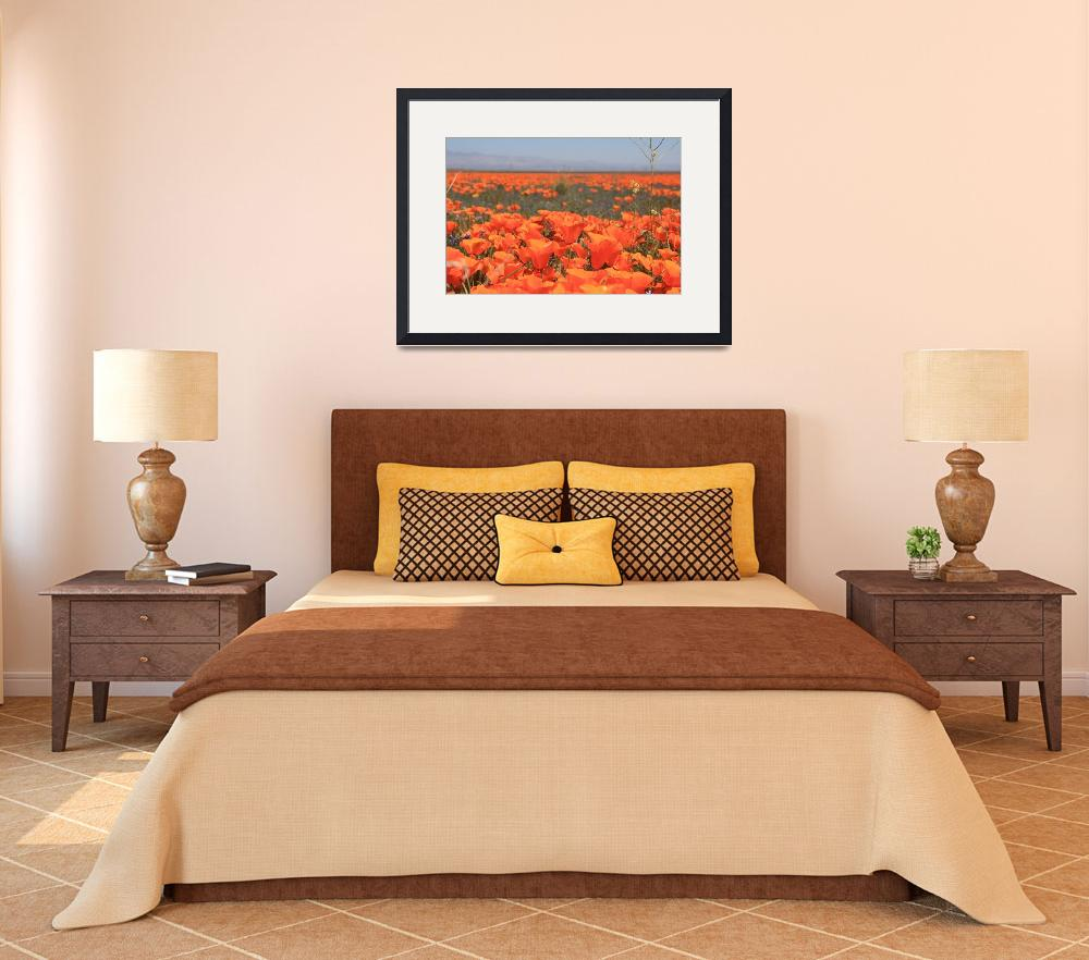 """""""Poppies 1 2010&quot  (2010) by raskoff"""