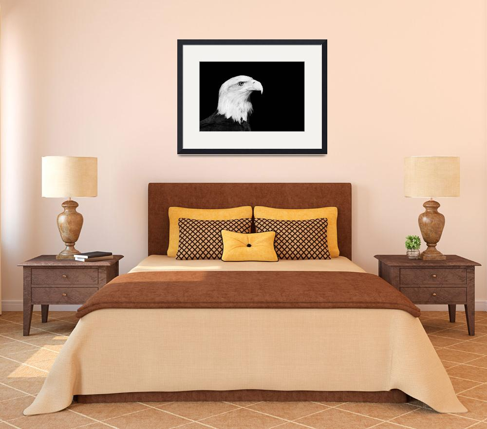 """""""Bald Eagle Portrait Black and White Print""""  (2012) by StephsShoes"""
