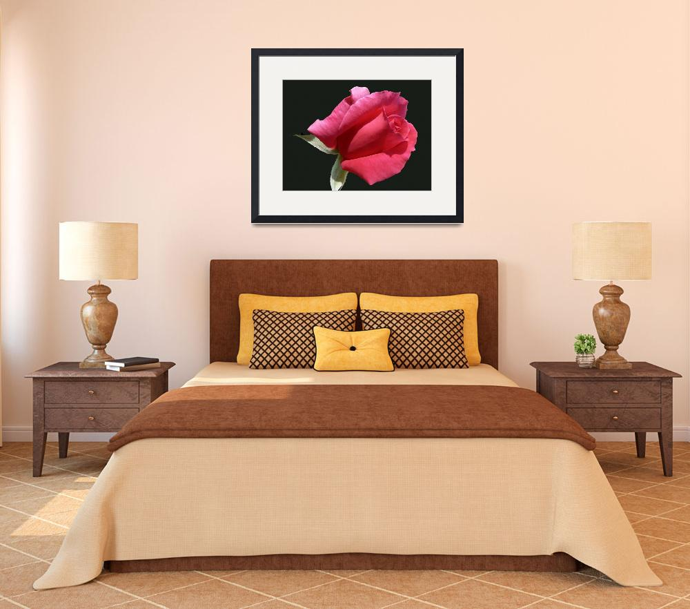 """""""One Perfect Rose Bud&quot  (2008) by rayjacque"""