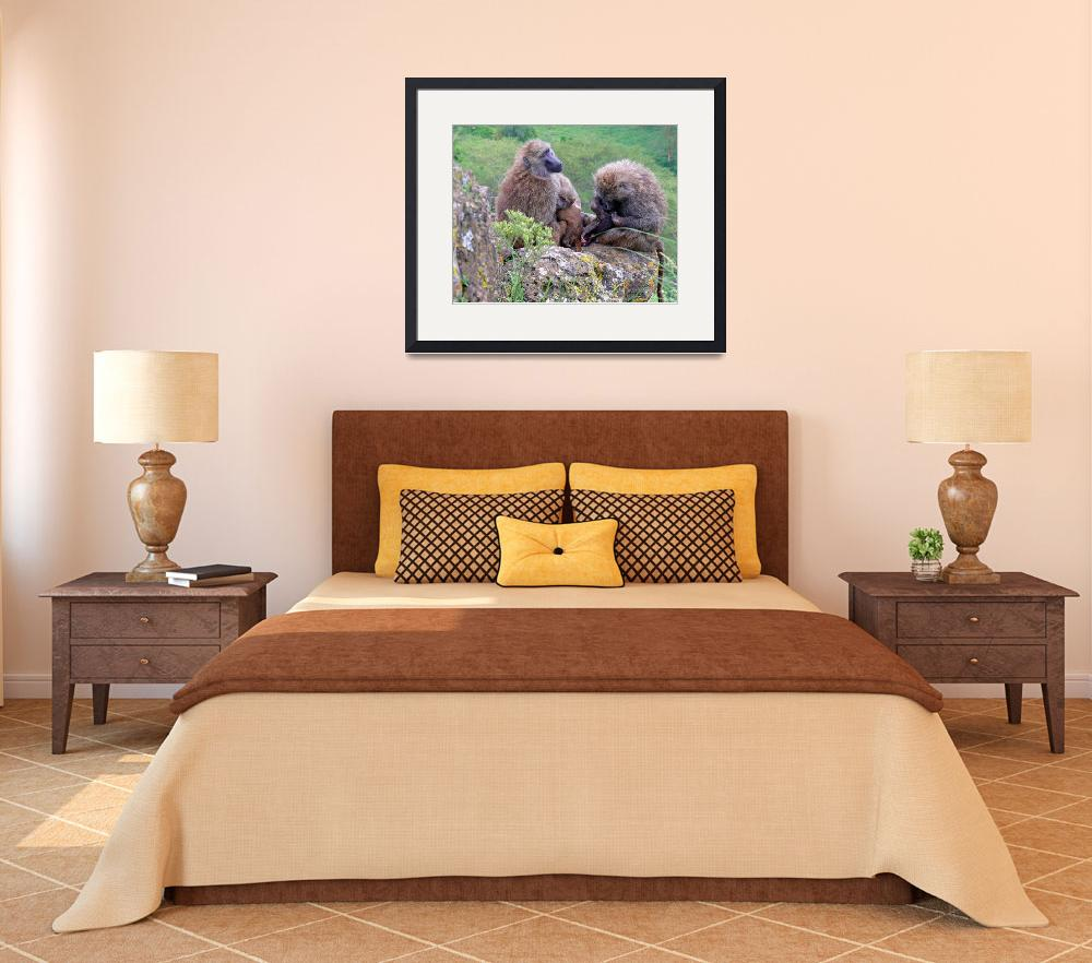 """""""Baboon Family&quot  (2007) by stockphotos"""