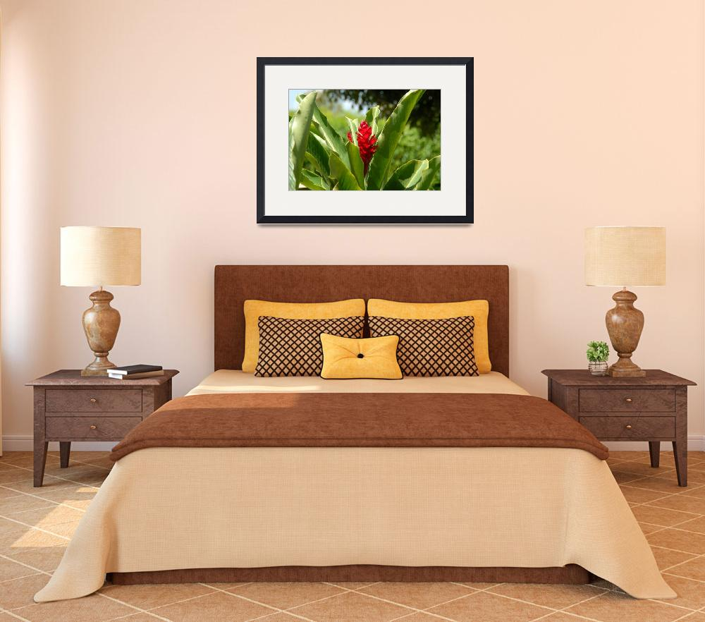 """Cayman Islands : Red Ginger Lily&quot  by RonScott"