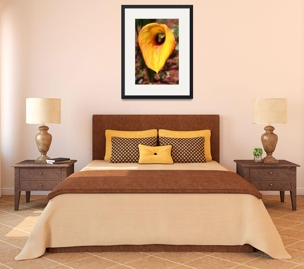 """""""Yellow Calla&quot  (2010) by DonnaCorless"""