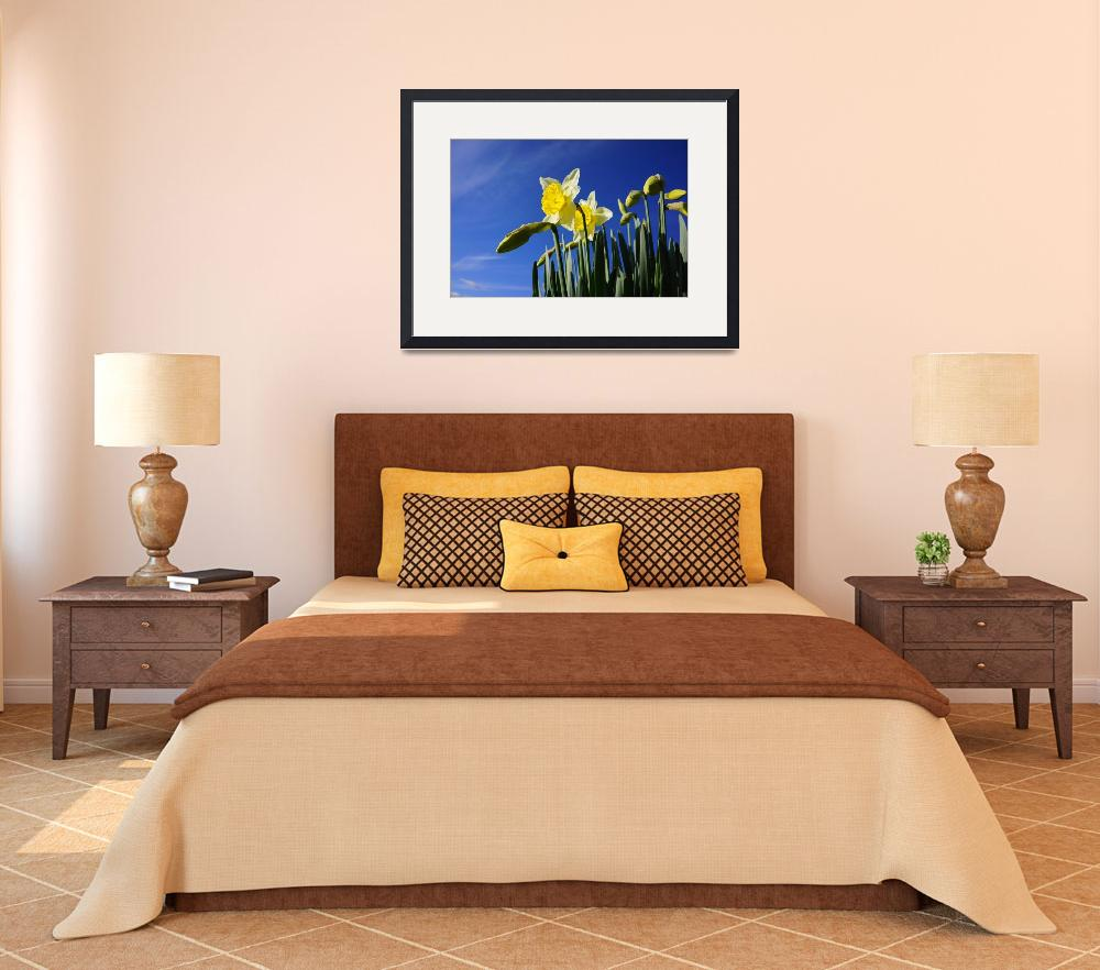 """""""Daffodils Flowers art prints Spring Blue Sky""""  (2014) by BasleeTroutman"""