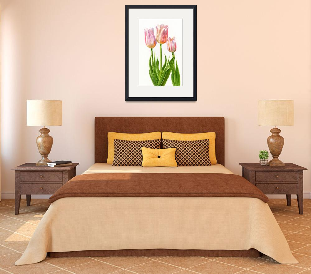 """Peach Colored Tulips, White Background""  (2012) by Pacific-NW-Watercolors"