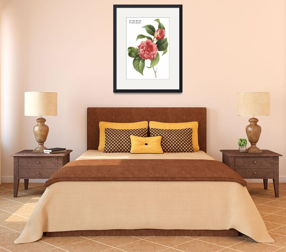 """Common Camellia (Camellia Japonica) Botanical Art&quot  by ArtLoversOnline"