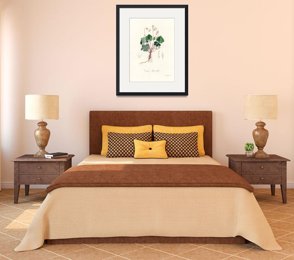 """Vintage Botanical Wood sorrel&quot  by FineArtClassics"