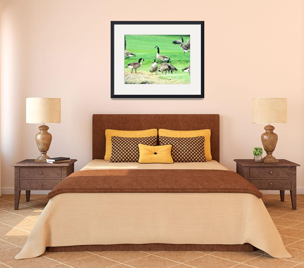 """""""Canadian Geese""""  by NickiG2012"""