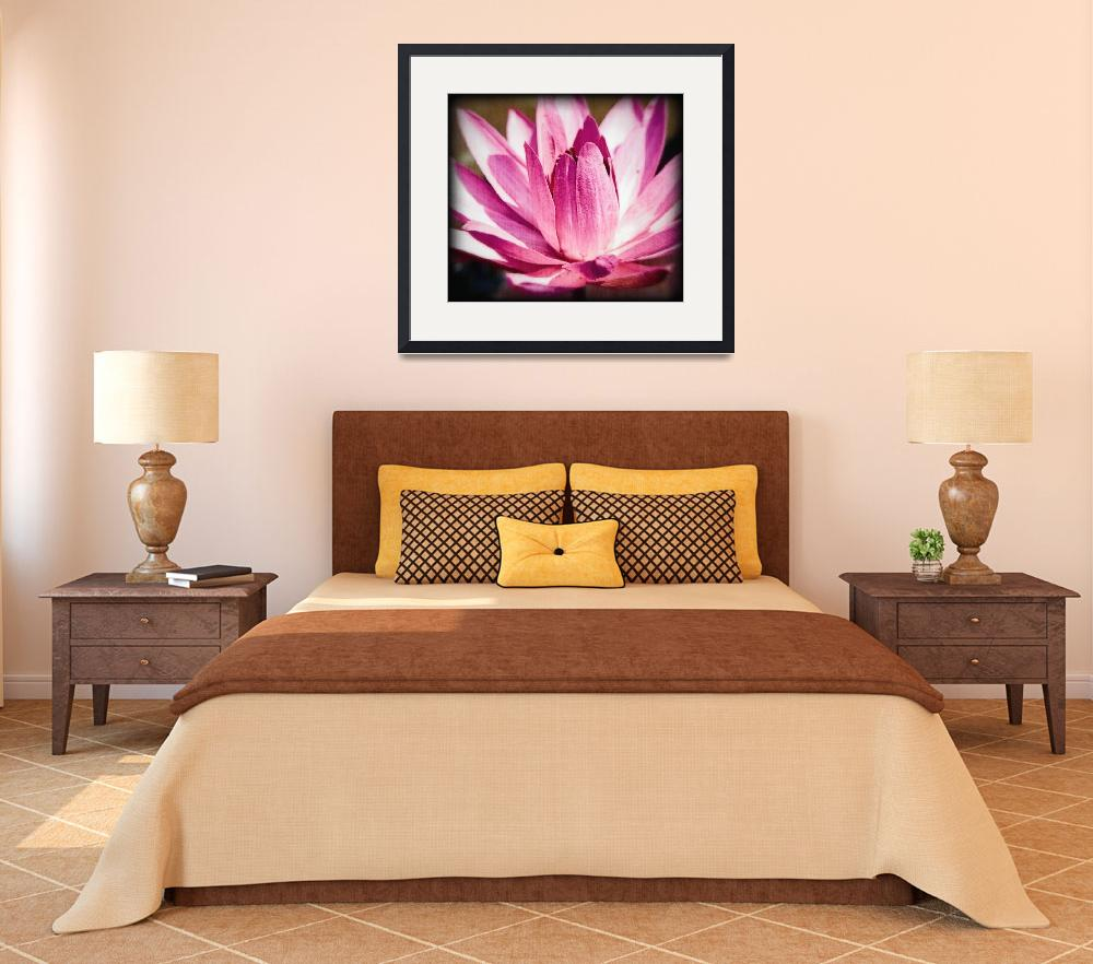 """Bright Pink Water Lily&quot  (2009) by johncorney"