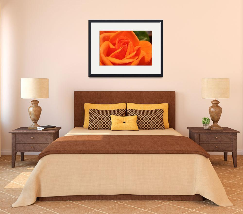 """Orange Rose&quot  (2005) by DestinysAgent"