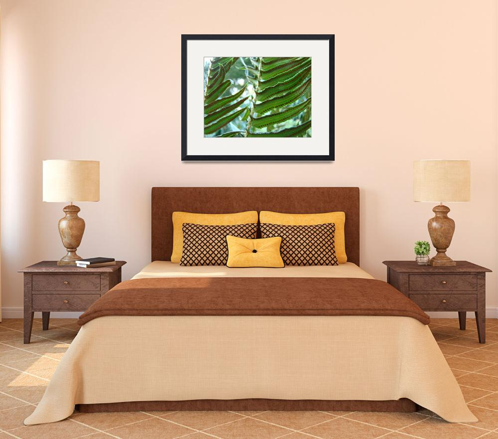 """FERNS Art Prints Green Forest Ferns Baslee Troutma&quot  (2009) by BasleeTroutman"