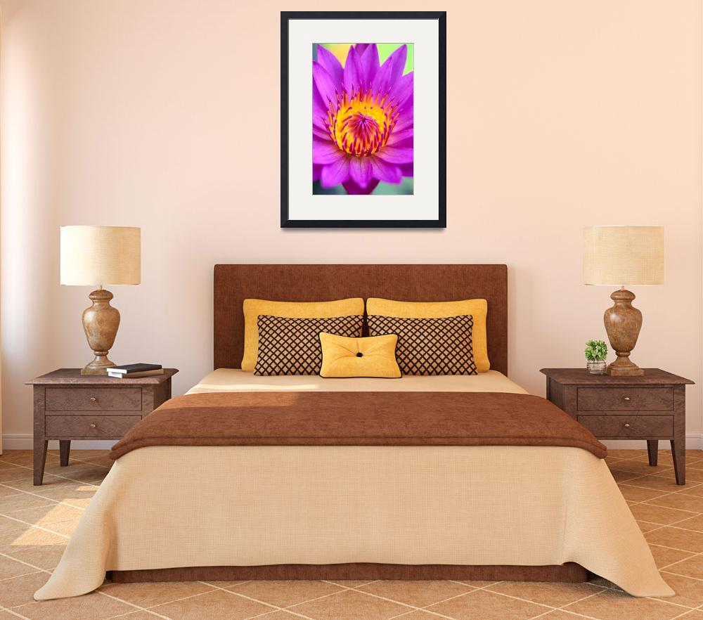 """""""Pink Water Lily Flower, Yellow Center&quot  by DesignPics"""