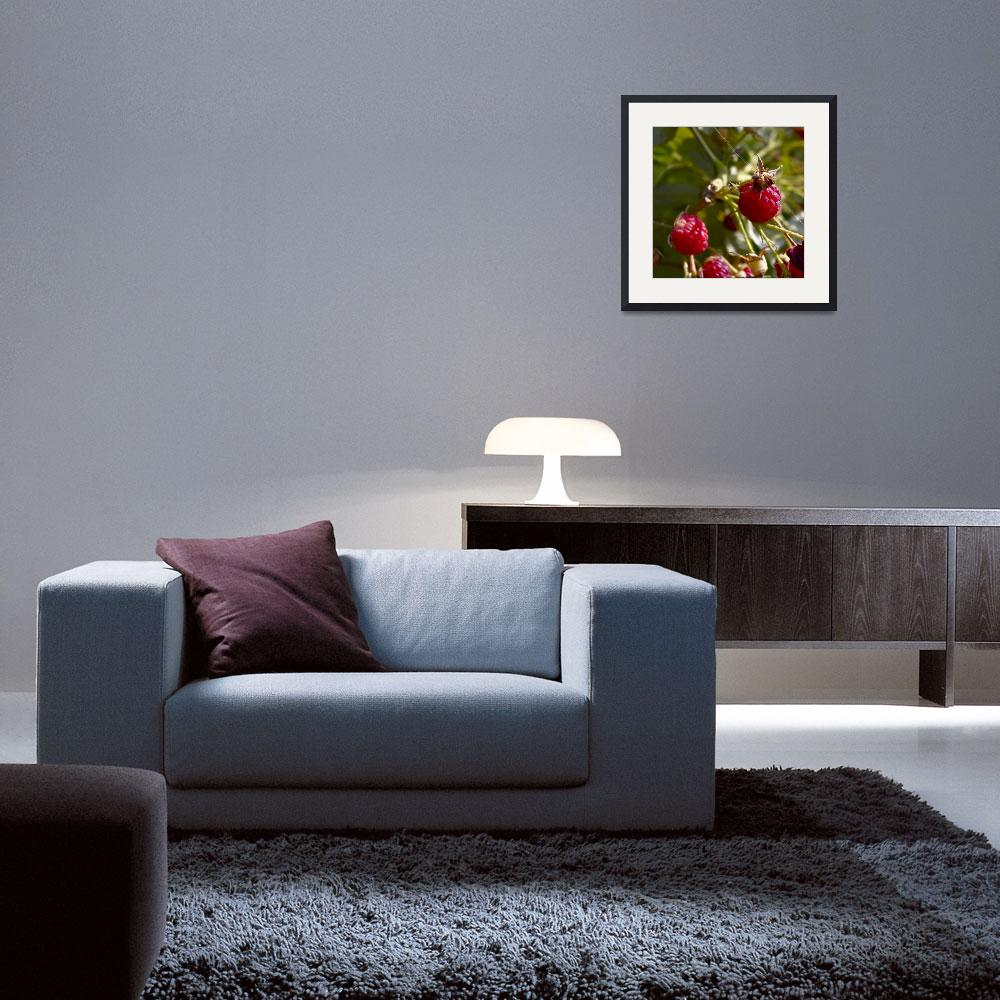 """raspberries&quot  (2012) by Photo30"