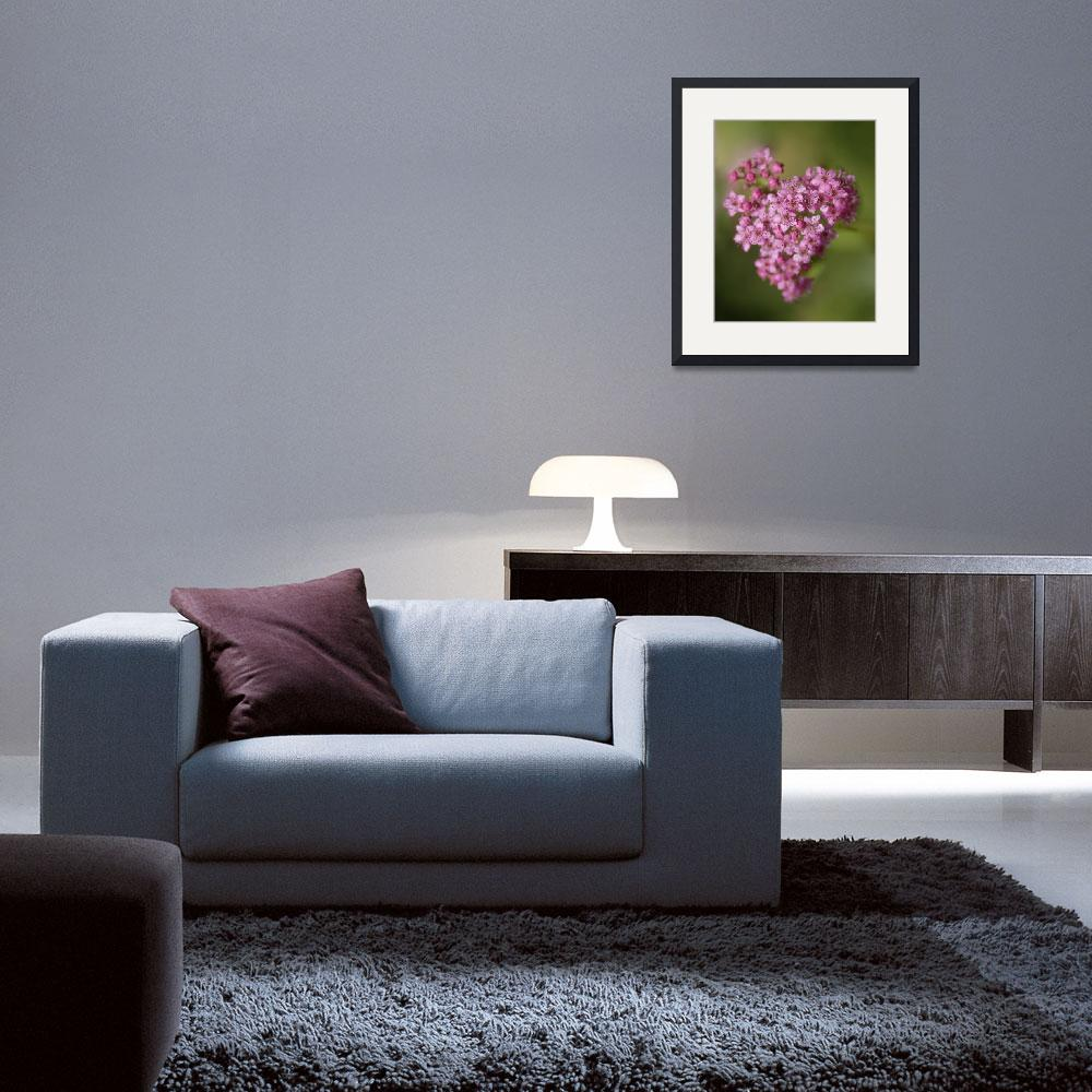 """""""Heart Flower&quot  (2012) by Clearycreativephoto"""