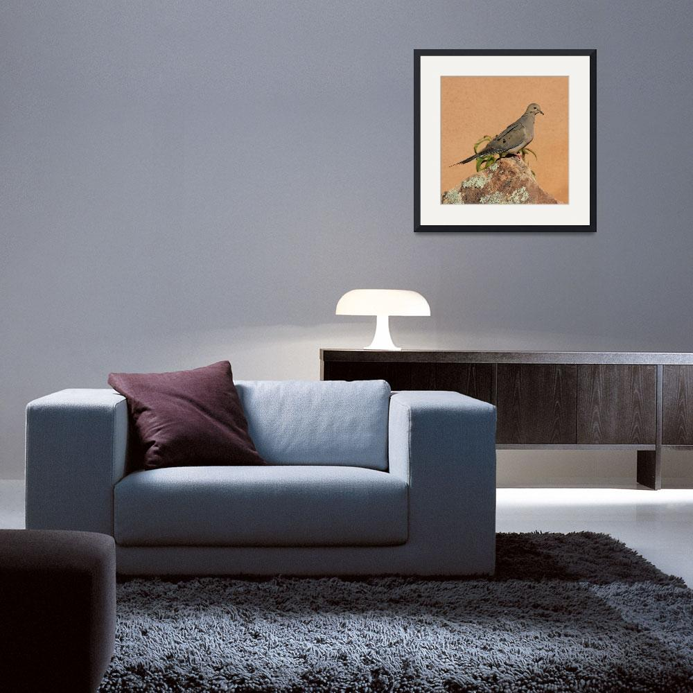 """""""Portrait of a Mourning Dove IMG_4199&quot  (2015) by rayjacque"""