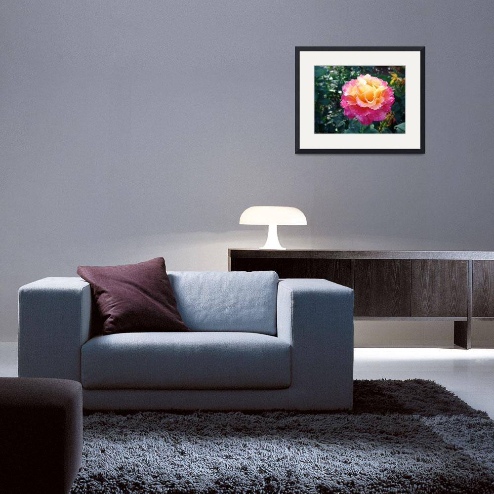 """""""Yellow and Pink Rose 2&quot  (2009) by qubitgfx"""