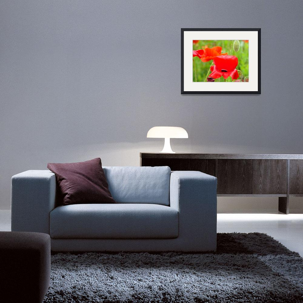 """""""Red Oriental Poppies Flowers art prints Baslee&quot  (2010) by BasleeTroutman"""