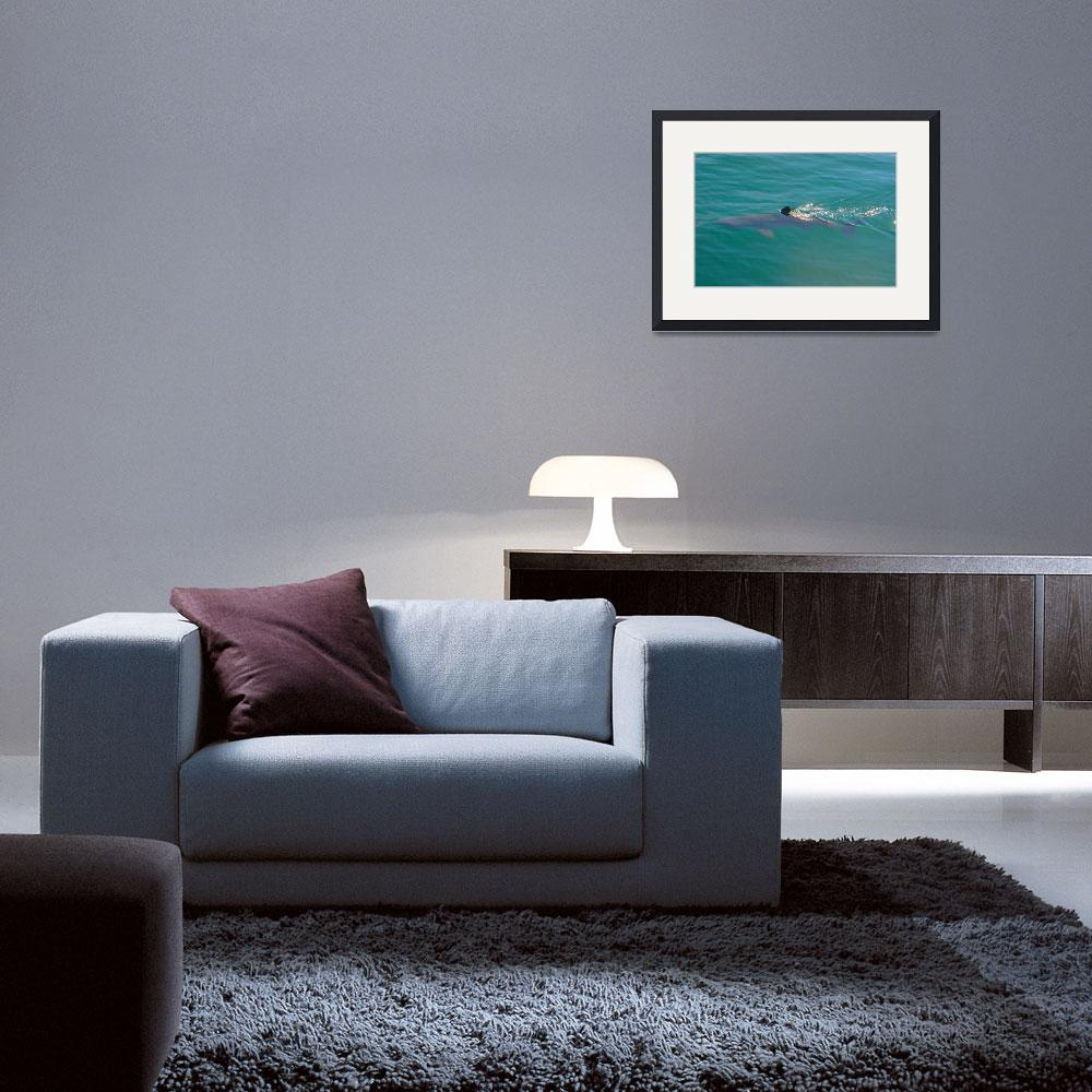 """""""Basking Shark&quot  by ksmith38a"""