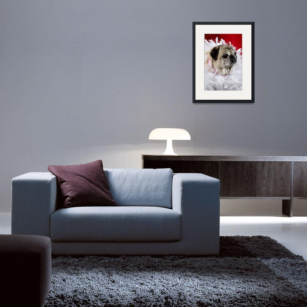 """""""Pretty Pug&quot  (2009) by MNTPhoto"""