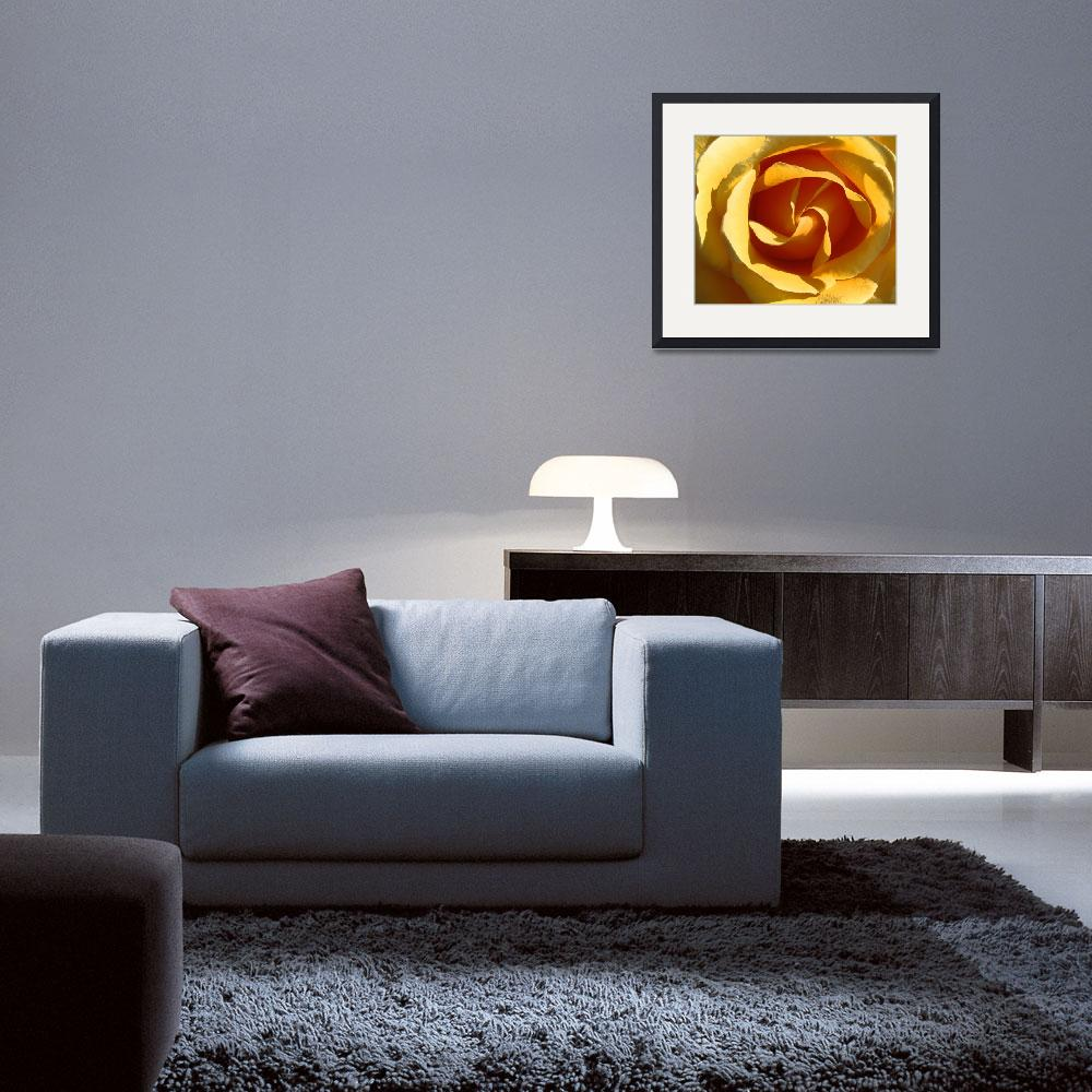 """""""Yellow Rose&quot  (2010) by petehamillcollection"""