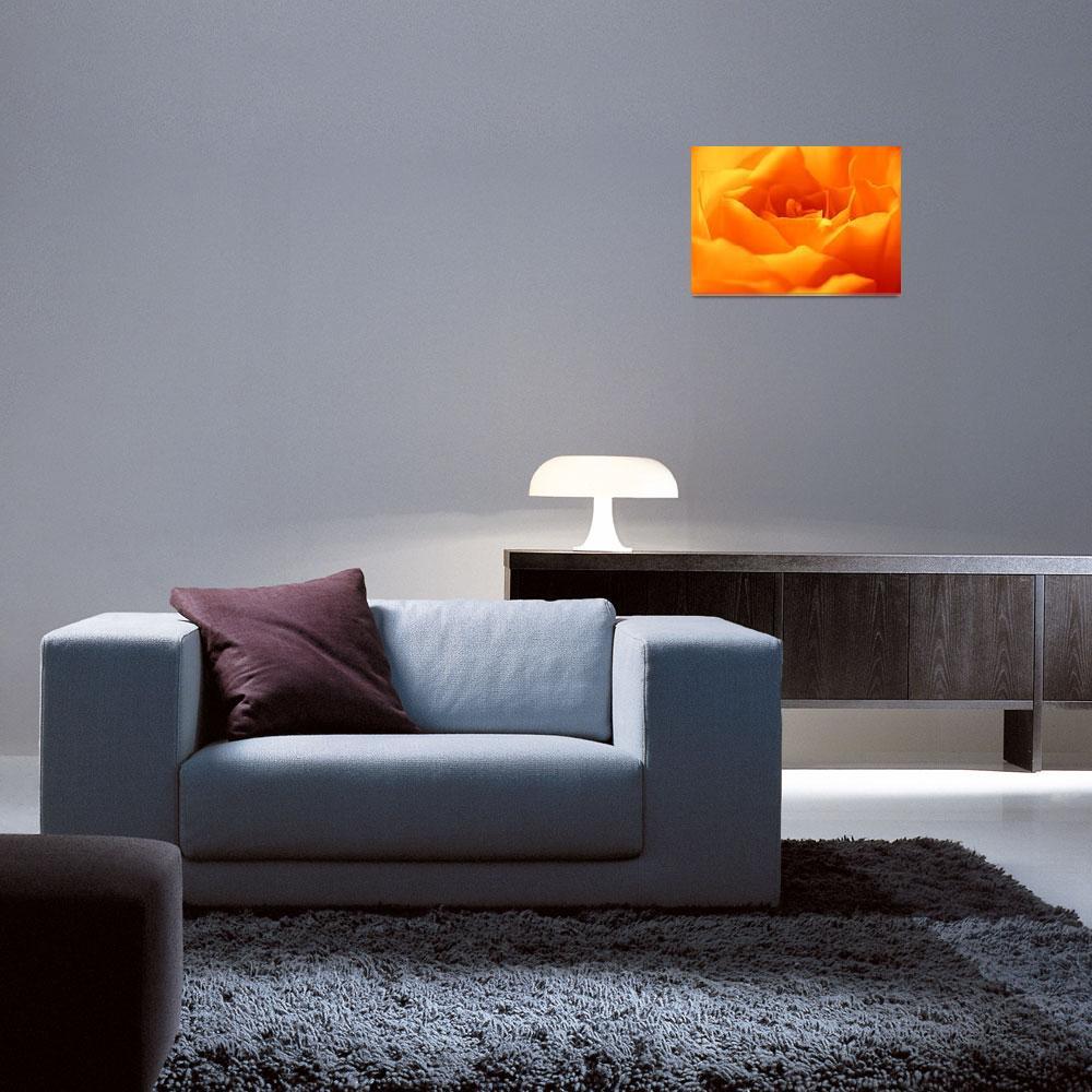 """""""Orange Rose""""  (2010) by gabii40"""