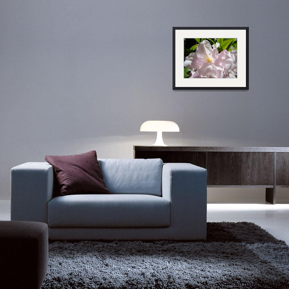 """""""Sunlit Pink Rhododendron Flowers art prints Floral&quot  (2010) by BasleeTroutman"""