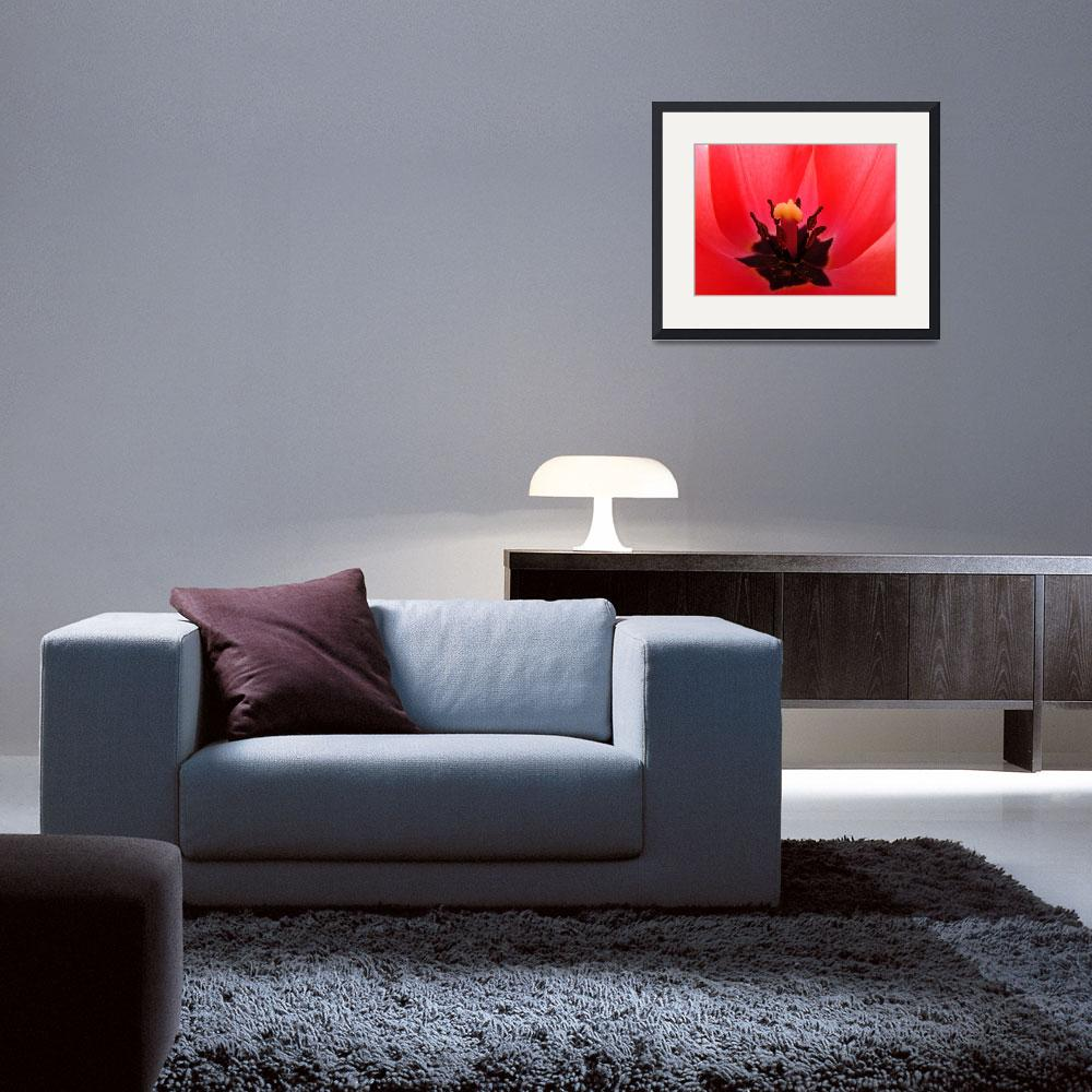 """TULIP Art Print Red Tulip Flower Giclee Baslee""  (2009) by BasleeTroutman"