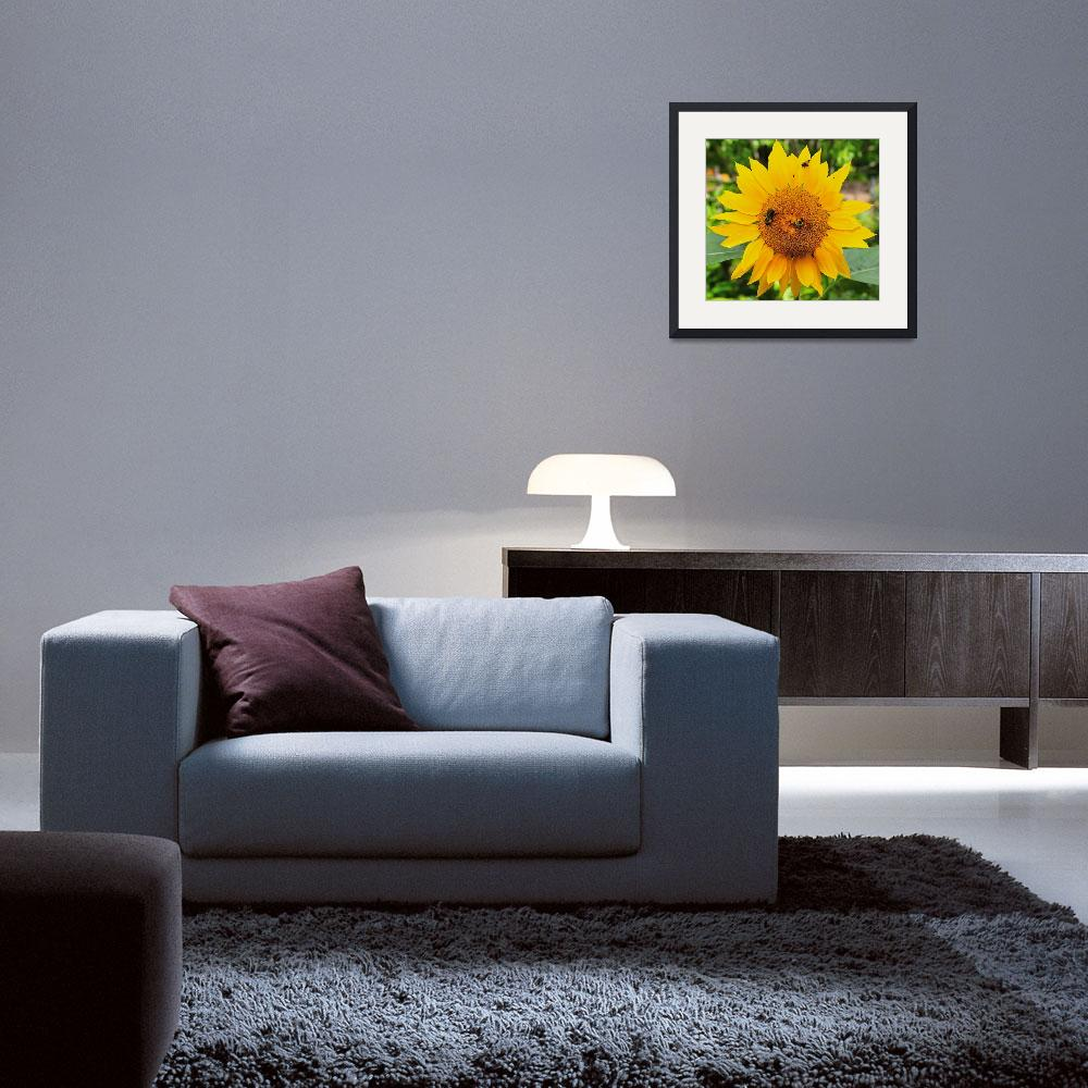 """""""Sunflower and Bee&quot  (2008) by RobertDonovan"""