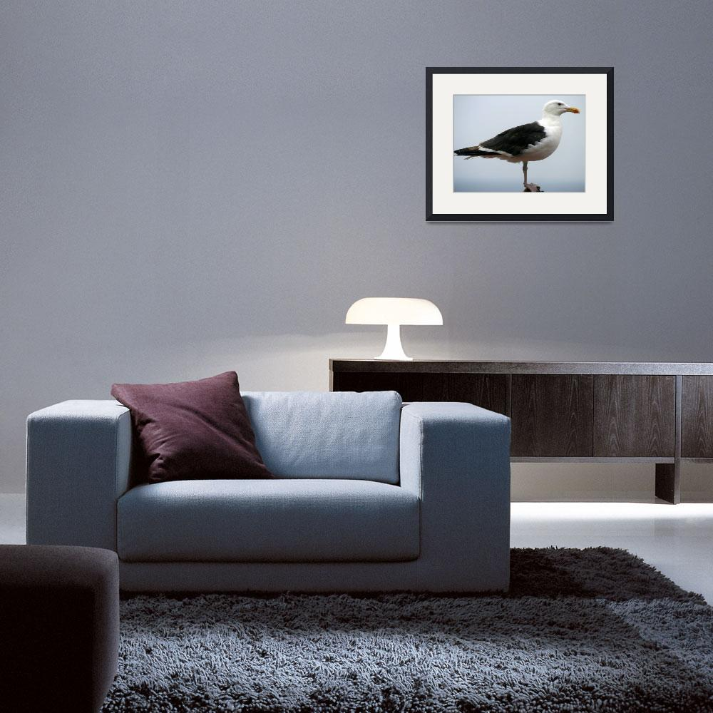 """""""Great Black Backed Gull&quot  by glenelg48"""