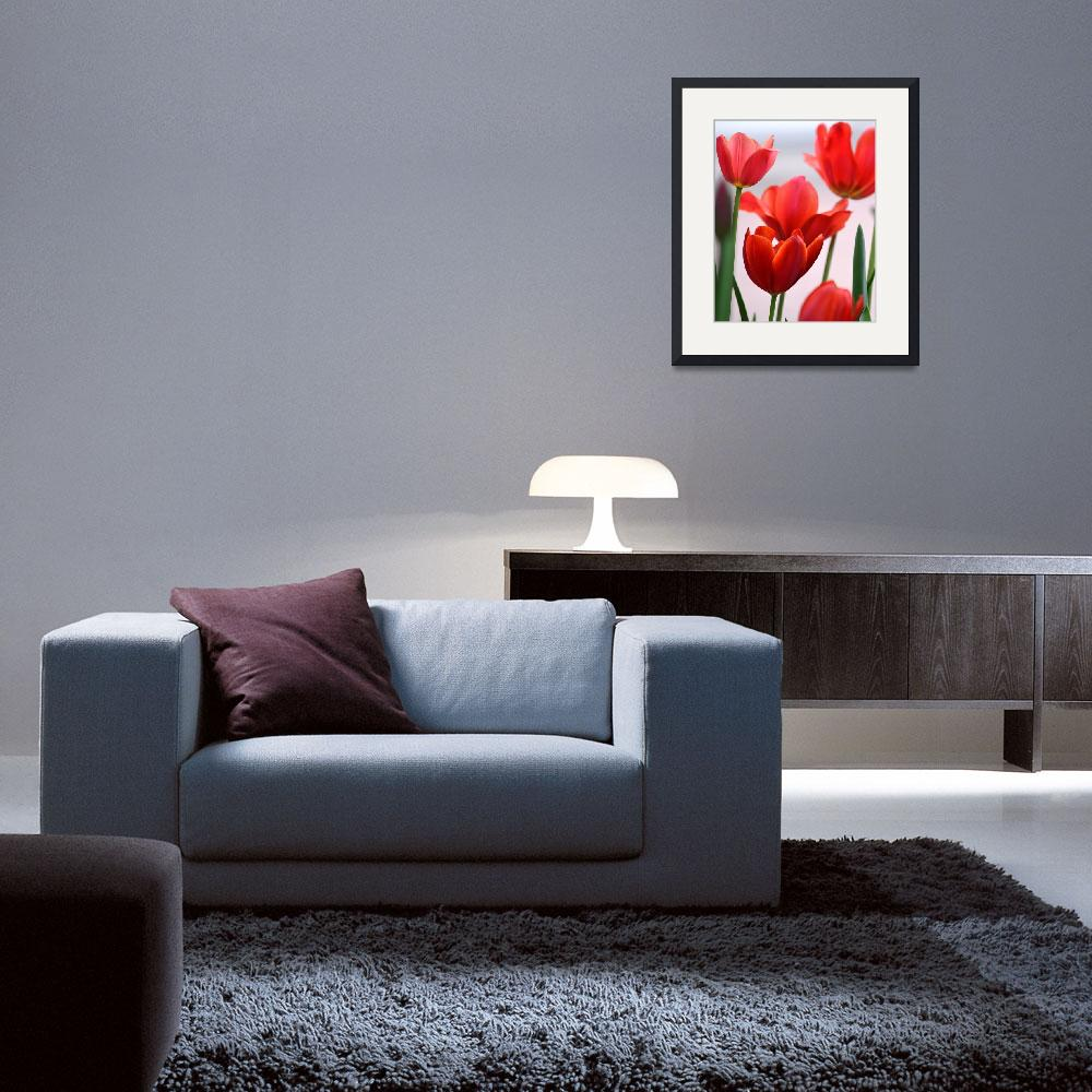 """""""Red Tulips""""  (2014) by joanhan"""