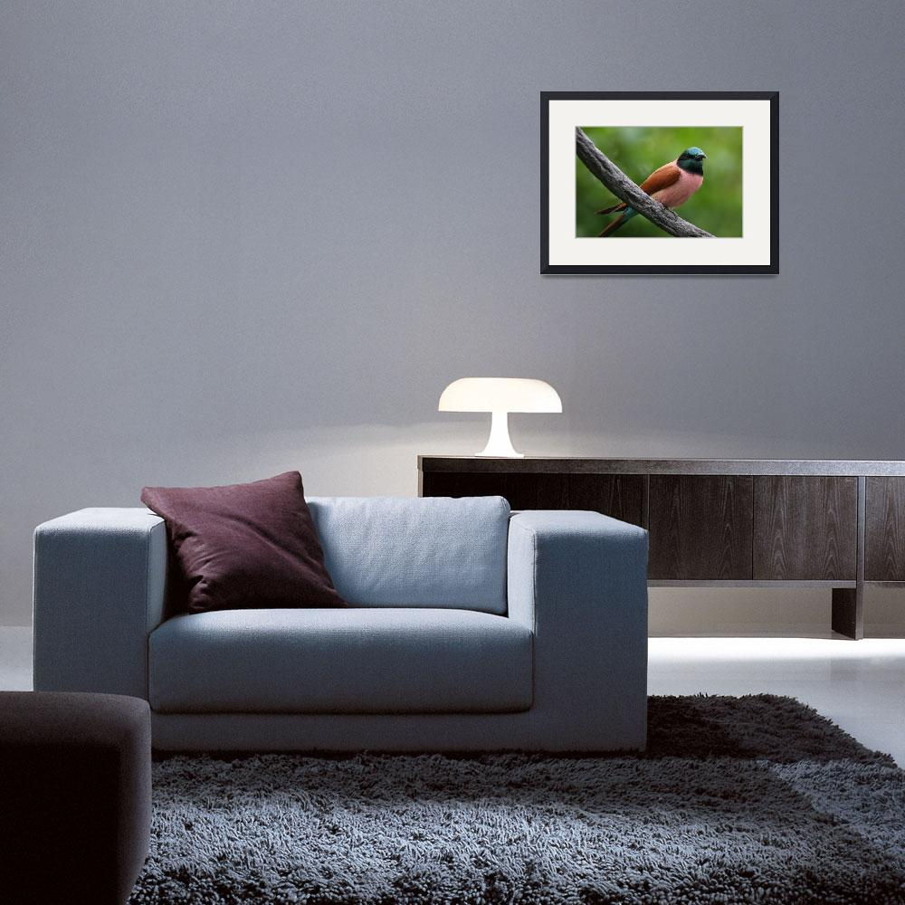 """""""Carmine Bee-Eater&quot  by qwalls"""