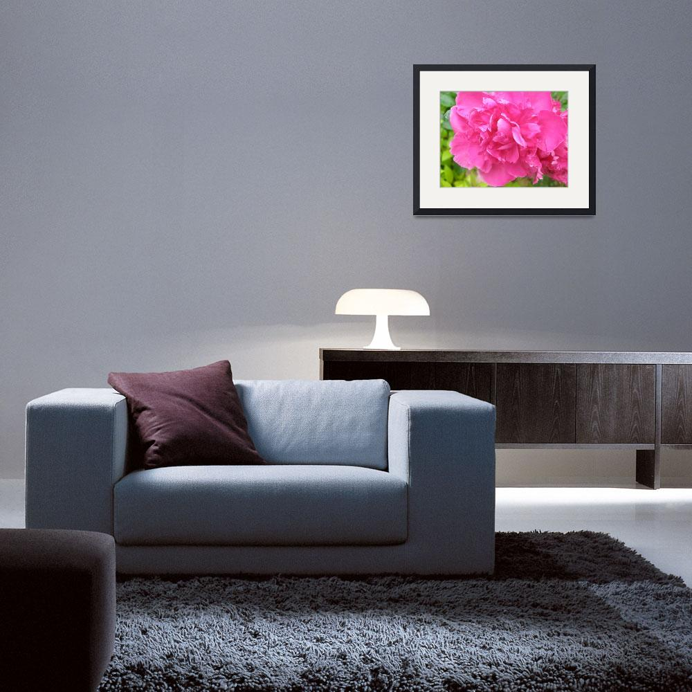 """""""Hot Pink Peony&quot  (2009) by TheMears"""