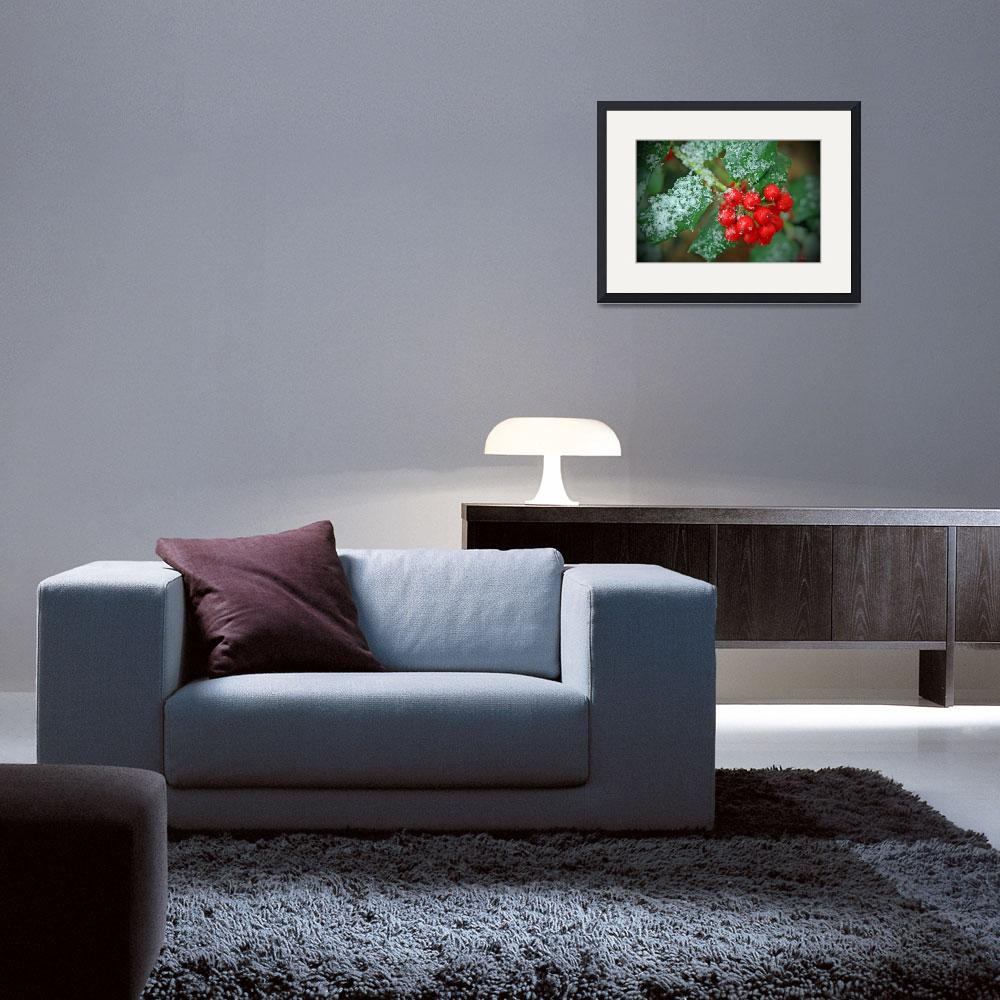"""""""Christmas Holly&quot  (2008) by daisyjoan"""