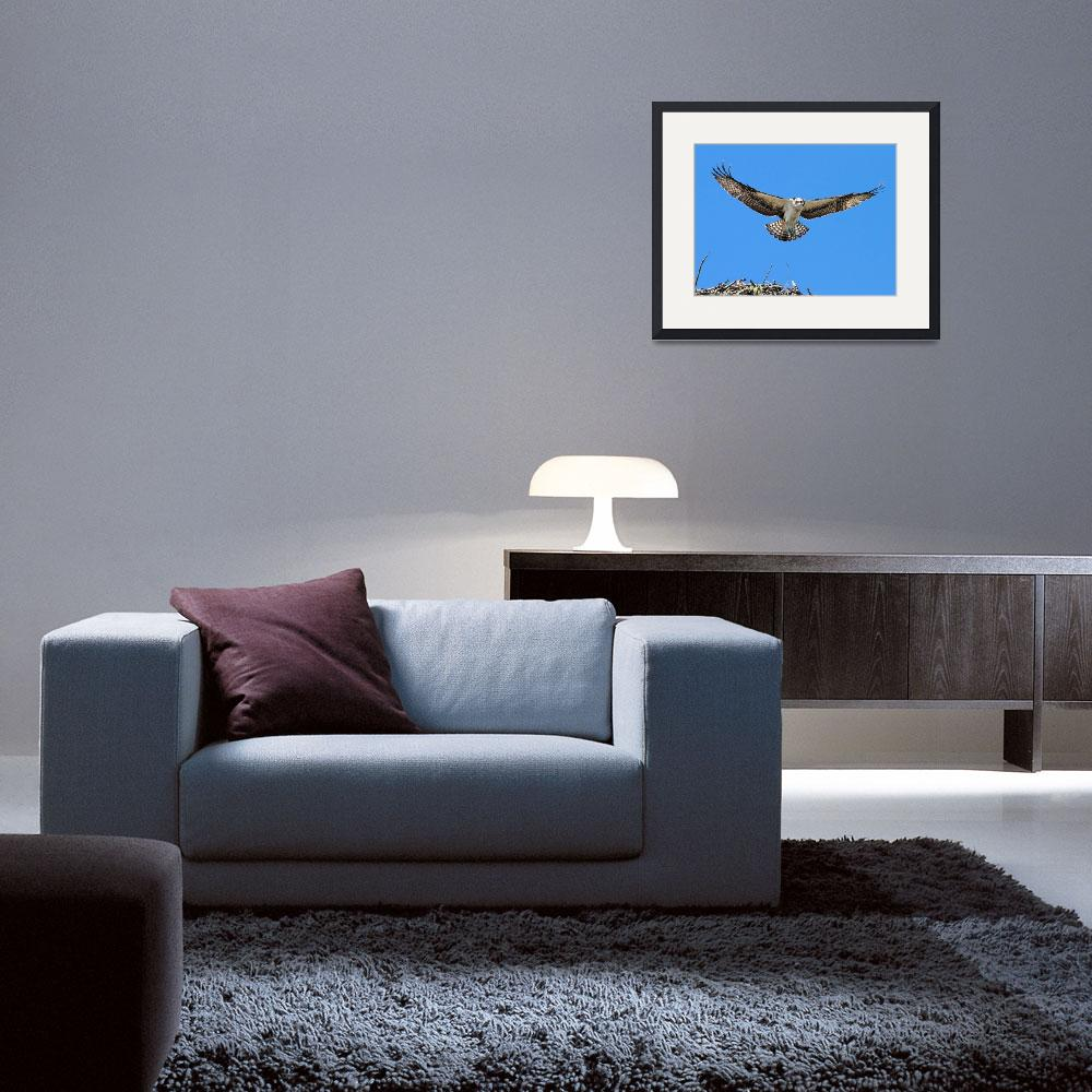 """""""First Flight&quot  (2013) by Photostahre"""