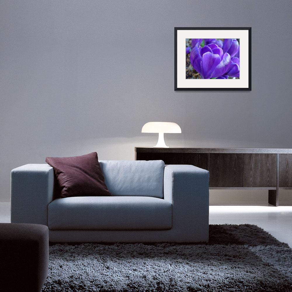 """Purple Crocus Flower Art Prints Spring Garden""  (2014) by BasleeTroutman"