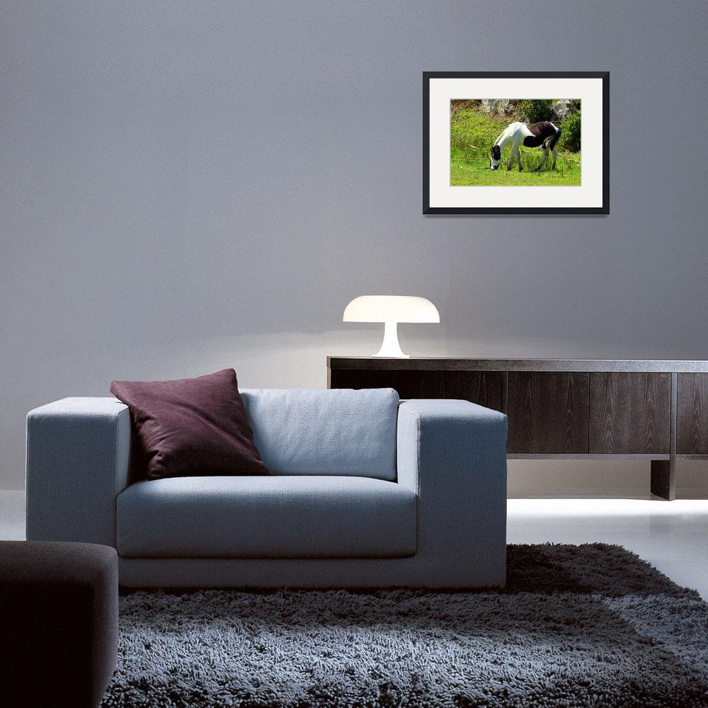 """""""Black and White Horse Grazing&quot  (2015) by rhamm"""