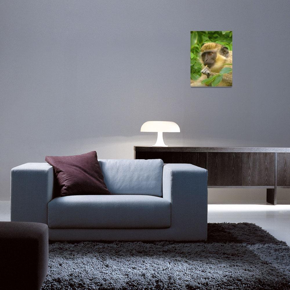 """Wild African Green Vervet Monkey-Caribbean""  (2018) by PixiePea"