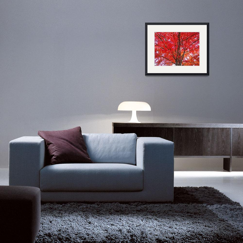 """""""Autumn Trees art prints Fall Trees Leaves&quot  (2010) by BasleeTroutman"""