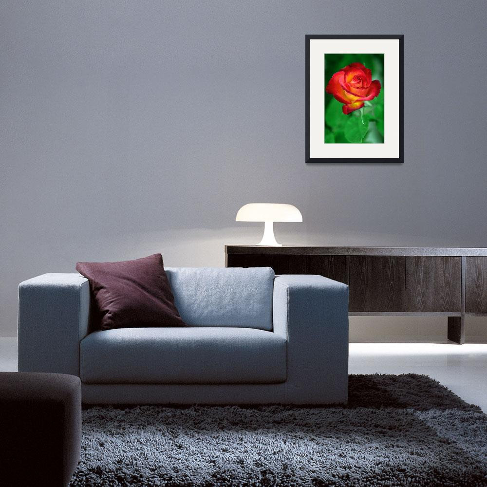 """""""Sunset Rose&quot  (2008) by paulhood"""