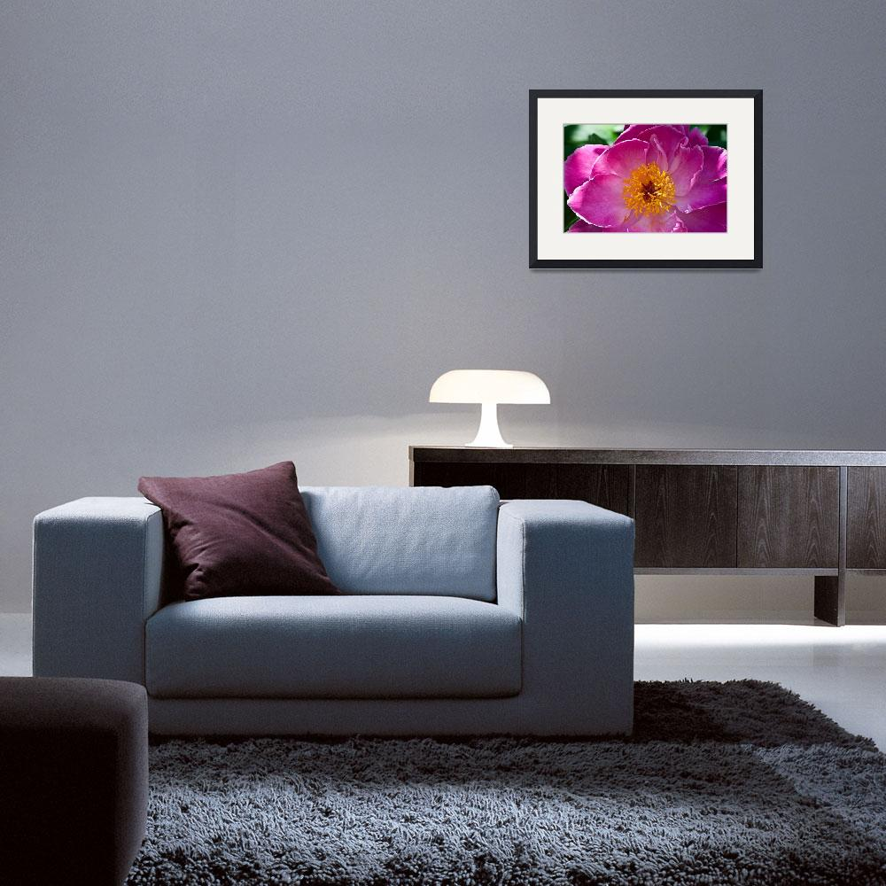 """""""Pink Peony&quot  (2009) by JAS_Photo"""