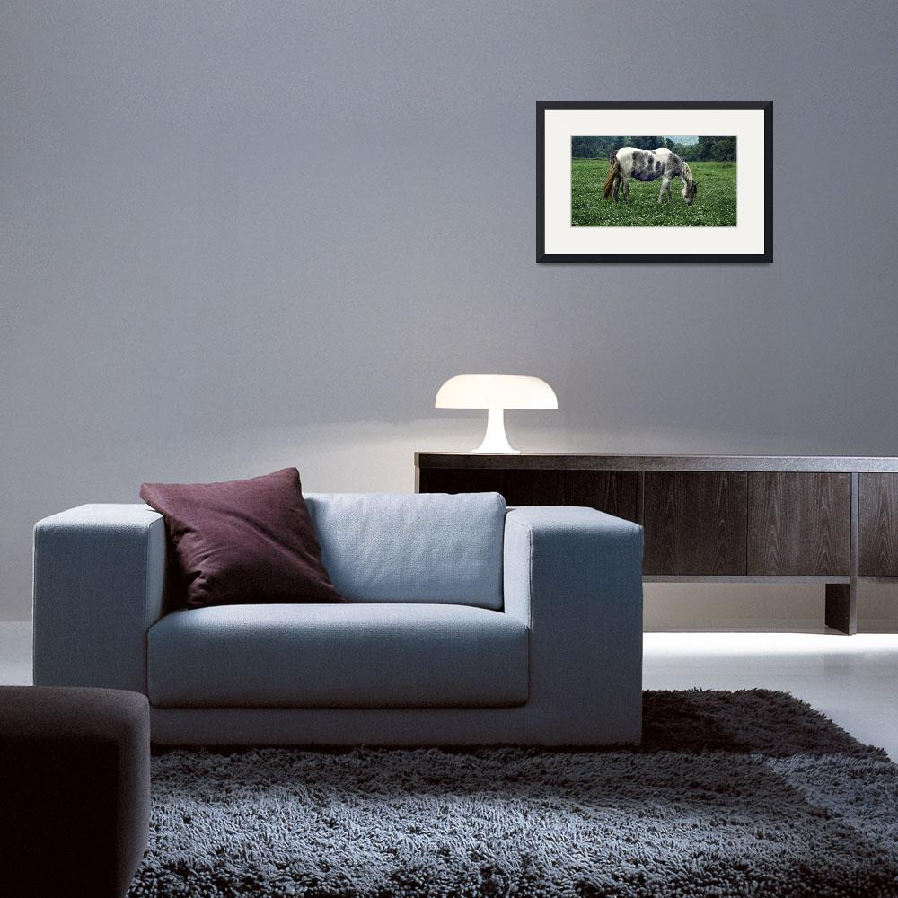 """""""Horse Grazing in a Field of Clover&quot  (2005) by WilshireImages"""